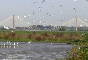 egrets-and-clark-bridge-for-web