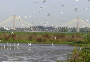 egrets-and-clark-bridge-for-web