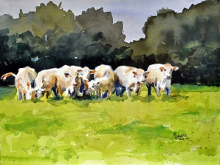 Warm Glow Charolais Herd by Spencer Meagher