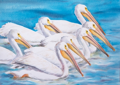 Seven Pelicans Swimming by Janine Helton