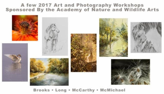 maggie-mccarthy-workshop-academy-of-nature-and-wildlife-arts-170302